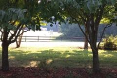 South Carolina Countryside